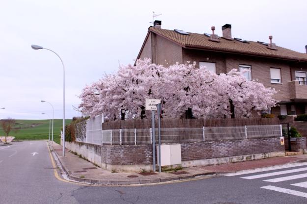 Primavera 2016- baja