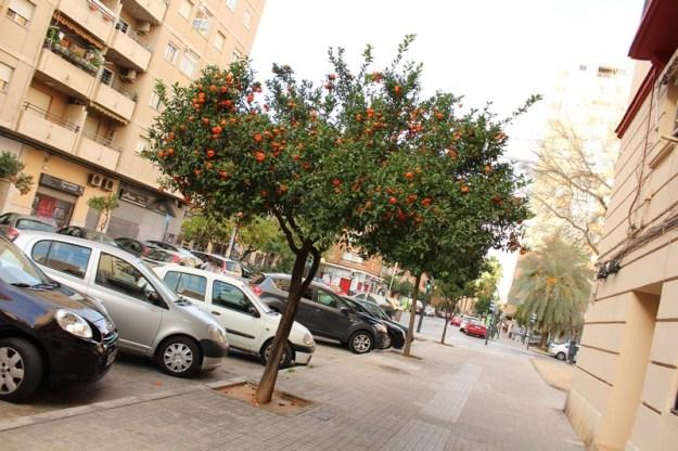 Valencia 2016 (36) (Copiar)