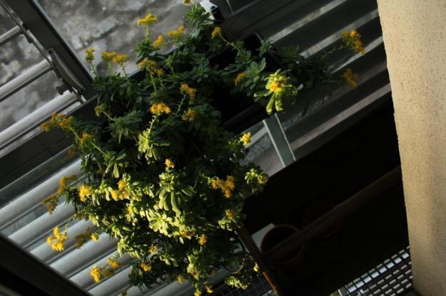 flores amarillas 2016 baja