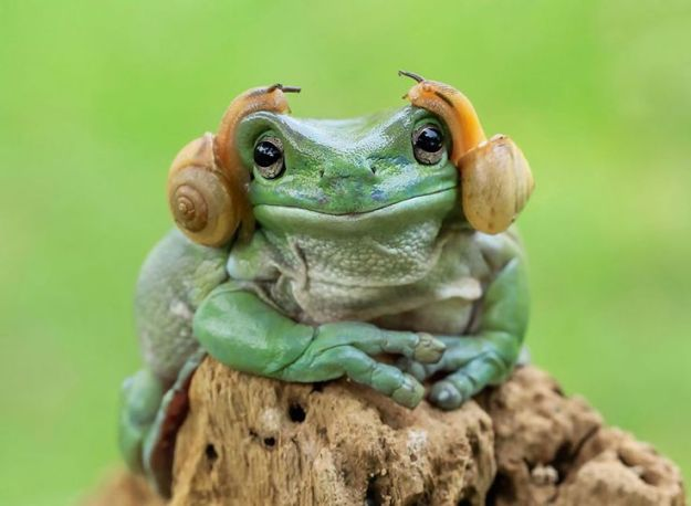 c671795063b2c50835db17e8c807ae6b--carrie-fisher-cute-frog