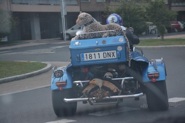 tigresa sobre coche